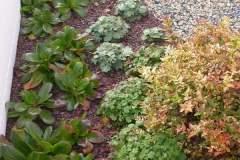 pianeta-rurale-piante-e-fiori-44