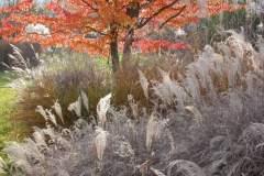 pianeta-rurale-piante-e-fiori-46