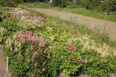 pianeta-rurale-piante-e-fiori-48