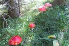 pianeta-rurale-piante-e-fiori-5