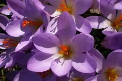 pianeta-rurale-piante-e-fiori-50