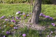 pianeta-rurale-piante-e-fiori-52