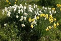 pianeta-rurale-piante-e-fiori-54