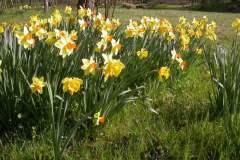pianeta-rurale-piante-e-fiori-55