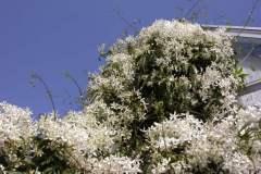 pianeta-rurale-piante-e-fiori-57