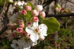 pianeta-rurale-piante-e-fiori-58