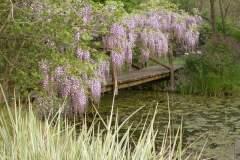 pianeta-rurale-piante-e-fiori-59
