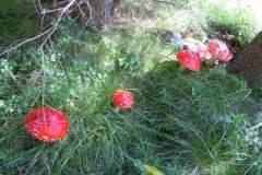 pianeta-rurale-piante-e-fiori-6