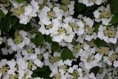 pianeta-rurale-piante-e-fiori-60