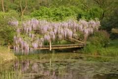 pianeta-rurale-piante-e-fiori-68