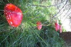 pianeta-rurale-piante-e-fiori-7