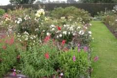 pianeta-rurale-piante-e-fiori-70