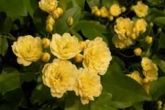 pianeta-rurale-piante-e-fiori-72