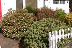 pianeta-rurale-piante-e-fiori-78