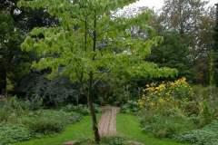 pianeta-rurale-piante-e-fiori-79