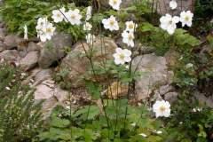 pianeta-rurale-piante-e-fiori-85