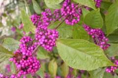 pianeta-rurale-piante-e-fiori-87