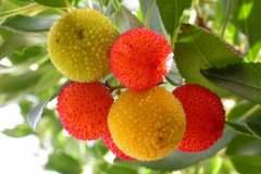 pianeta-rurale-piante-e-fiori-90