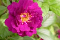 pianeta-rurale-piante-e-fiori-91