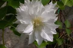 pianeta-rurale-piante-e-fiori-92