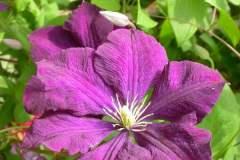 pianeta-rurale-piante-e-fiori-93