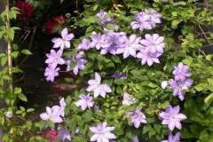 pianeta-rurale-piante-e-fiori-94
