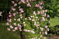 pianeta-rurale-piante-e-fiori-96