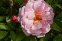 pianeta-rurale-piante-e-fiori-97