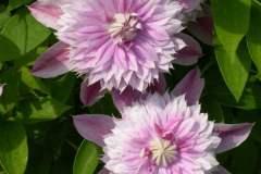 pianeta-rurale-piante-e-fiori-98
